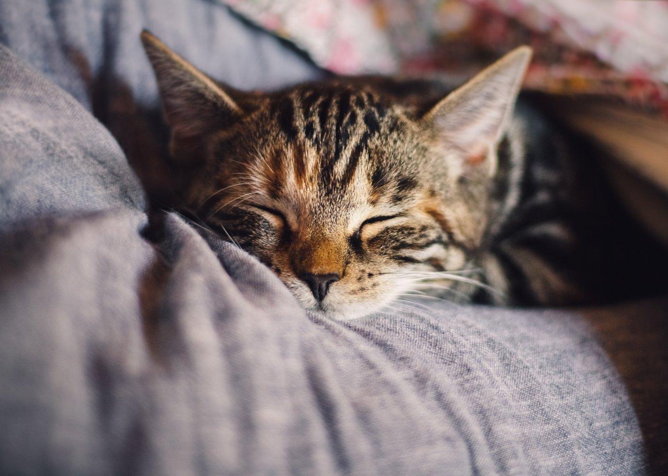 Katzenferieninsel